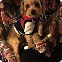 Adopt A Pet :: Tiki Ray - Los Angeles, CA