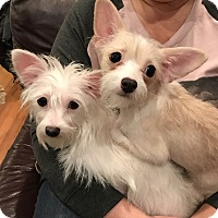 Adopt A Pet :: Katie and Sadie - Nanuet, NY