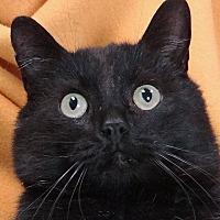Adopt A Pet :: Scar - Renfrew, PA