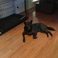 Adopt A Pet :: Foxy Lady - Tallahassee, FL