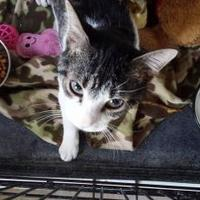 Adopt A Pet :: Como - Winona, MN