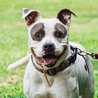 Adopt A Pet :: Valentina - McCalla, AL