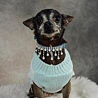 Adopt A Pet :: Hazel Grace - St. Louis Park, MN