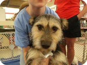 Terrier (Unknown Type, Small) Mix Dog for adoption in Rocky Mount, North Carolina - Ellie