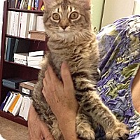 Adopt A Pet :: Tita - Tucson, AZ