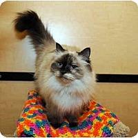 Adopt A Pet :: Annie - Farmingdale, NY
