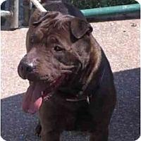 Adopt A Pet :: Coal - Newport, VT