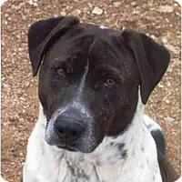Adopt A Pet :: Valentine - YERINGTON, NV