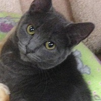 Adopt A Pet :: Thelma - Atco, NJ
