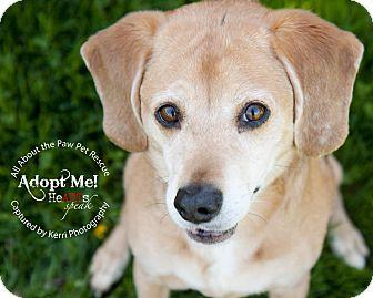 Beagle Mix Dog for adoption in Mansfield, Ohio - Lolli