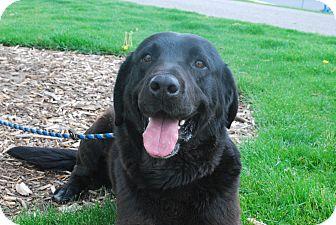 Labrador Retriever Mix Dog for adoption in Twin Falls, Idaho - Thunder