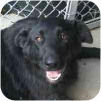 Belgian Malinois/Shepherd (Unknown Type) Mix Dog for adoption in Coleraine, Minnesota - Sebastian