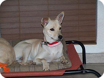 Labrador Retriever/German Shepherd Dog Mix Dog for adoption in Apache Junction, Arizona - Mandy