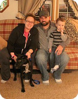 Labrador Retriever/Pointer Mix Dog for adoption in Northville, Michigan - zLL16 Simon - ADOPTED