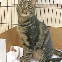 Adopt A Pet :: Coco - East Brunswick, NJ