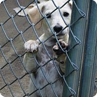 Adopt A Pet :: BARTHOLOMEW - Lincolndale, NY