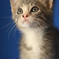 Adopt A Pet :: Speedy - Winston-Salem, NC