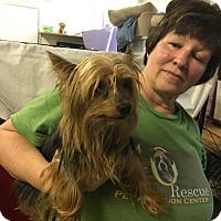 Adopt A Pet :: Chewey - Virginia Beach, VA