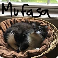 Adopt A Pet :: Mufasa - in foster care - Randolph, NJ