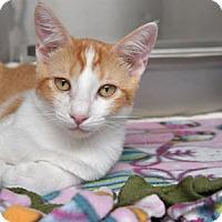Adopt A Pet :: Vincent - Van Nuys, CA