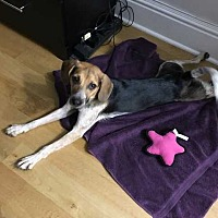 Adopt A Pet :: Millie - Manhattan, NY