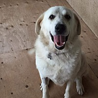 Adopt A Pet :: Haley - Lucknow, ON