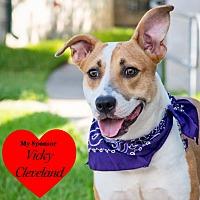 Beagle/Mixed Breed (Medium) Mix Puppy for adoption in San Leon, Texas - Delia