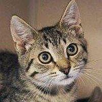 Adopt A Pet :: PANDORA - Hampton, VA