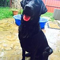 Adopt A Pet :: Tag - Denton, TX