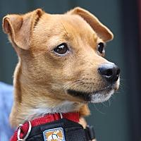 Adopt A Pet :: Sir Robin - West Grove, PA