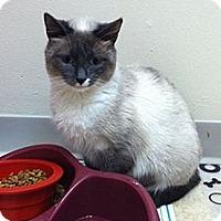 Adopt A Pet :: Mochi - Pittstown, NJ