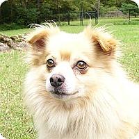 Adopt A Pet :: Jovi - Mocksville, NC