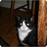 Adopt A Pet :: Tucks - Lombard, IL