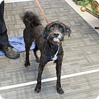 Adopt A Pet :: Dasher - Tinton Falls, NJ