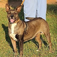 Adopt A Pet :: Louisiana - Byron, GA