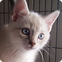 Adopt A Pet :: Sarah - San Fernando Valley, CA