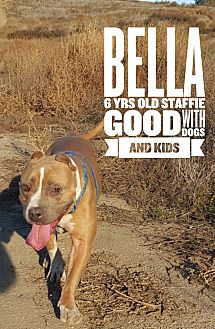 Staffordshire Bull Terrier Mix Dog for adoption in Rancho Santa Fe, California - Bella