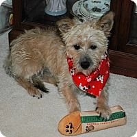 Adopt A Pet :: DICKENS - Mission Viejo, CA