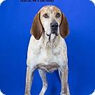 Adopt A Pet :: Red / AC 18490
