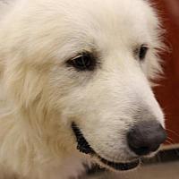 Adopt A Pet :: Oakley (S) - Spring, TX