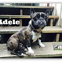 Adopt A Pet :: Adele - Woodinville, WA