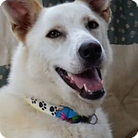 Adopt A Pet :: Crystal - Portland, ME