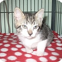 Adopt A Pet :: Prancer - Shelton, WA