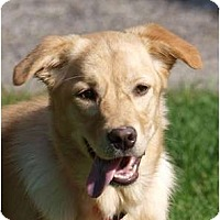 Adopt A Pet :: Shyann - Toronto/Etobicoke/GTA, ON