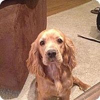 Adopt A Pet :: MISTY - Tacoma, WA