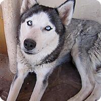 Adopt A Pet :: Ana - Santa Fe, NM