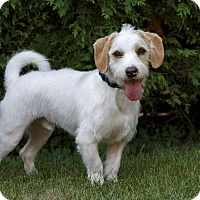 Adopt A Pet :: Clancy - Rigaud, QC