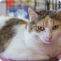 Adopt A Pet :: Wisteria - Merrifield, VA