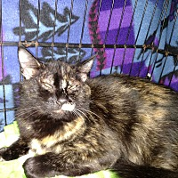 Adopt A Pet :: Aileen - Kingston, WA