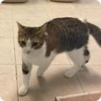 Adopt A Pet :: CJ 5839 - Columbus, GA